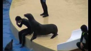 Swimmer saved by dolphin and resuscitated by sealion-CPR
