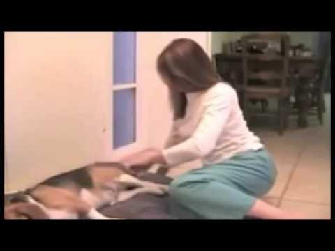 Dog farting Poo
