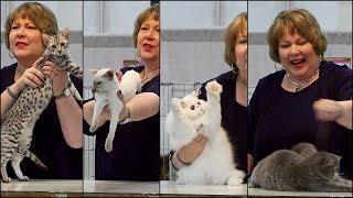 CFA International 2016 - Kathy Black allbreed kitten final