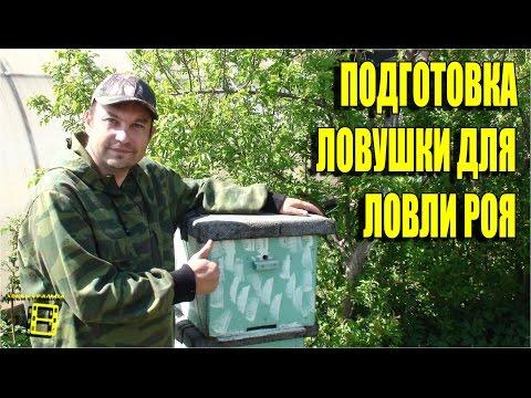 пчеловодство ловля диких роев