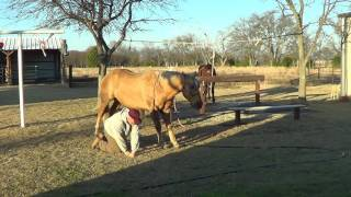 Equine Dentistry Floating Horse Teeth  6 of 6 - Care After Sedation & Waking Up Horses