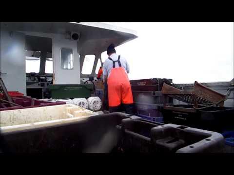 Whelk fishing in Wexford Aurora