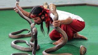 Cobra Snake 🐍    Hindi Comedy    Discovery    Hollywood   Bollywood   Bhojpuri   Zee Tv   Zee Anmol
