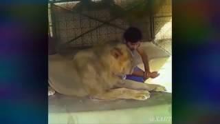 दुनिया के रंग देखो- lion pets - दुबई के शेखों के अद्भुत शोंक