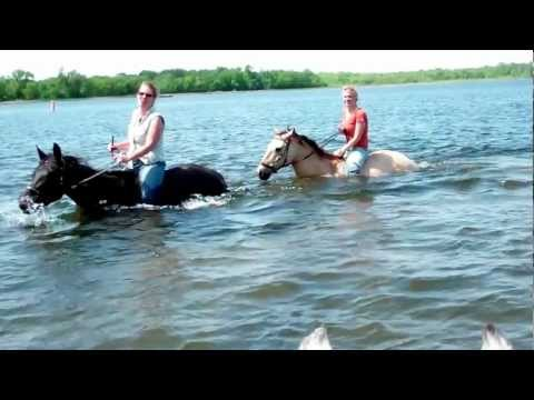 Swimming with horses with Jubilee Bridles
