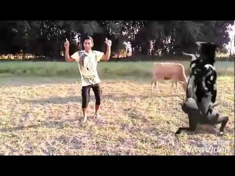 Xxx Mp4 Bodo Video Boro Funny 3gp Sex