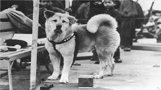 """""""هاتشيكو"""" الكلب الذي انتظر صاحبه 10 سنوات في محطة قطار"""