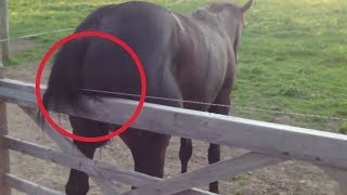 Electric Fence Horse ✓