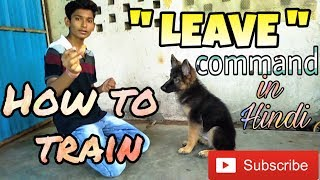 How to train leave command to a dog in Hindi | Dog training in Hindi |