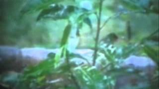 Badolo Dinero Prothom-INDRANI SEN.wmv