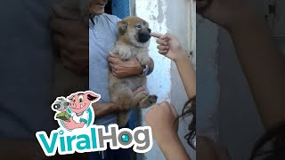 Dog Dislikes Girl