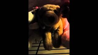 My cute stuffed animals