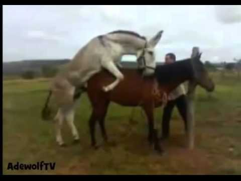 Xxx Mp4 Animal Reproduction How To Mate Donkey With Horse 3gp Sex