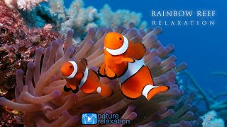 3HRS Stunning Underwater Footage + Relaxing Music   French Polynesia, Indonesia 4K Upscale