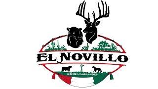 El Novillo Mexico DMP