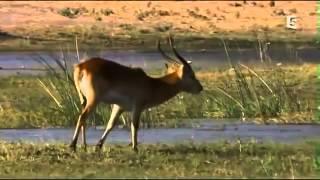 Les prédateurs de la savane, une lutte pour la survie   documentaire animaux sauvages