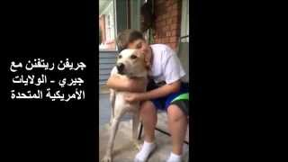 كلب بلدي مصري الجزء الأول Egyptian Baladi Dog Part One