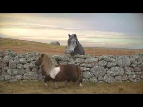 A Dança do Pônei The Pony Dance