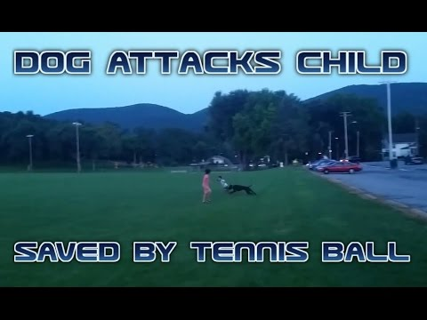 Dog attacks child, then gets saved by tennis ball!!