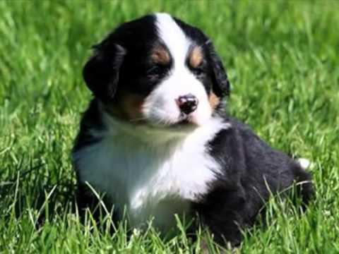 Exposição de Filhotes de várias raças de cães. Cute Puppies