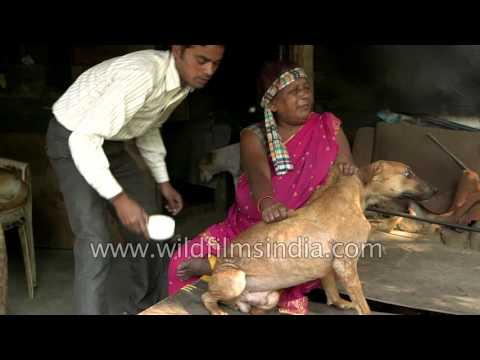 The Dog Lady of Delhi