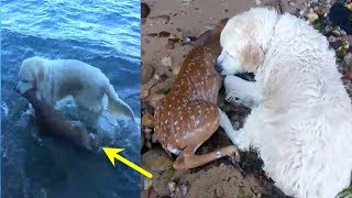Dog Sees Baby Deer Struggling In The Water And Immediately Springs Into Action