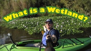 What's a Wetland? Paddle marshes, swamps & bogs w/Lucas Miller and discover their importance