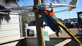 Franklin Drive Thru Safari | 1-14-18