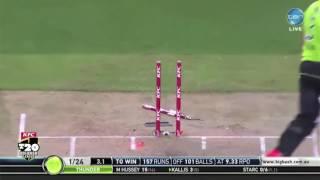 Michael stark top wickets