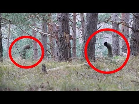 5 Scariest Things Caught By Campers 2