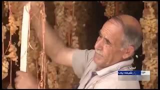 Iran Grapes harvest, Juice & Raisin processing, Urmia county برداشت انگور و توليد كشمش و آبميوه