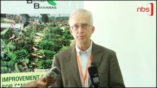 NARO: New Banana Breed Are Disease Resistant
