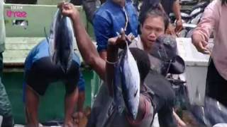 Extreme tuna fishing - Blood, Sweat and Takeaways