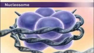 Строение хромосомы и эпигенетическая регуляция