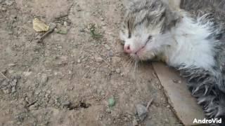 Orphaned cats گربه های یتیم