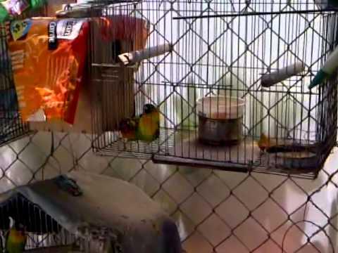 Xxx Mp4 XXX Bird 3gp Sex