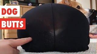 Dog Butts | Funny Dog Video Compilation 2017