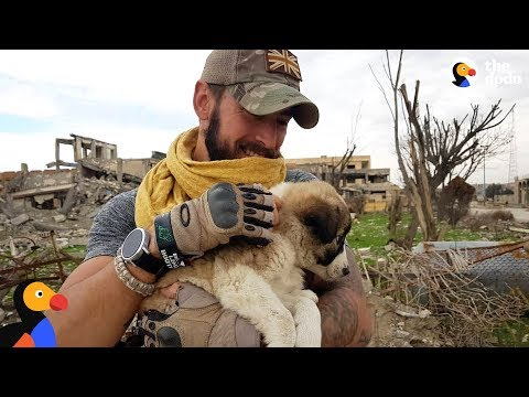 Soldier Saves Puppy Then Realizes He Can t Live Without Her The Dodo