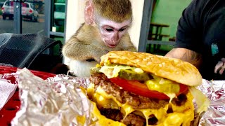 Baby monkey visits Five Guys!