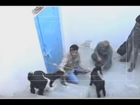 Xxx Mp4 Janwar VS Insan Mein Hoon Kaun – 26 March 2016 3gp Sex