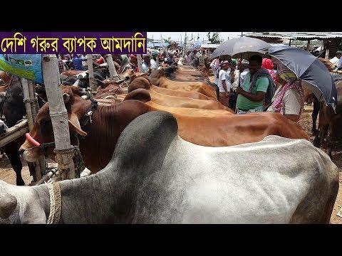 Xxx Mp4 Big Big Desi Cow For Sale Eid Ul Azha 2018 দেশি গরুর দাম জানতে ভিডিওটি দেখুন 3gp Sex