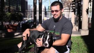 5 Easy Steps to Become a Dog Whisper