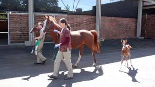 Tour the OSU College of Veterinary Medicine