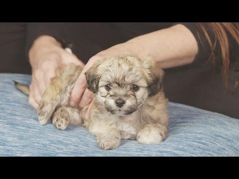 Xxx Mp4 30 Minute Puppy Massage 3gp Sex