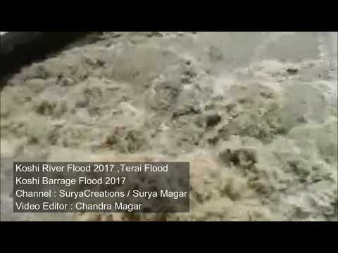 Koshi Barrage Flood 2017 | Flood In Terai Region Nepal | Koshi River Flood 2017