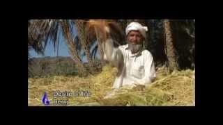 Rice, برنج,,Agriculture in Iran ,Paddy rice,شالیکاری برنج