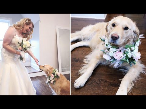 Xxx Mp4 Bride Makes Dog Flower Girl At Wedding 39 She 39 S Just Family 39 3gp Sex