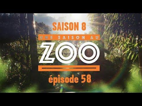 Xxx Mp4 Une Saison Au Zoo S8 Ep 58 3gp Sex