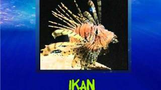 Haiwan Laut