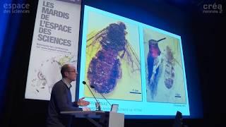 L'origine et l'essor des fourmis
